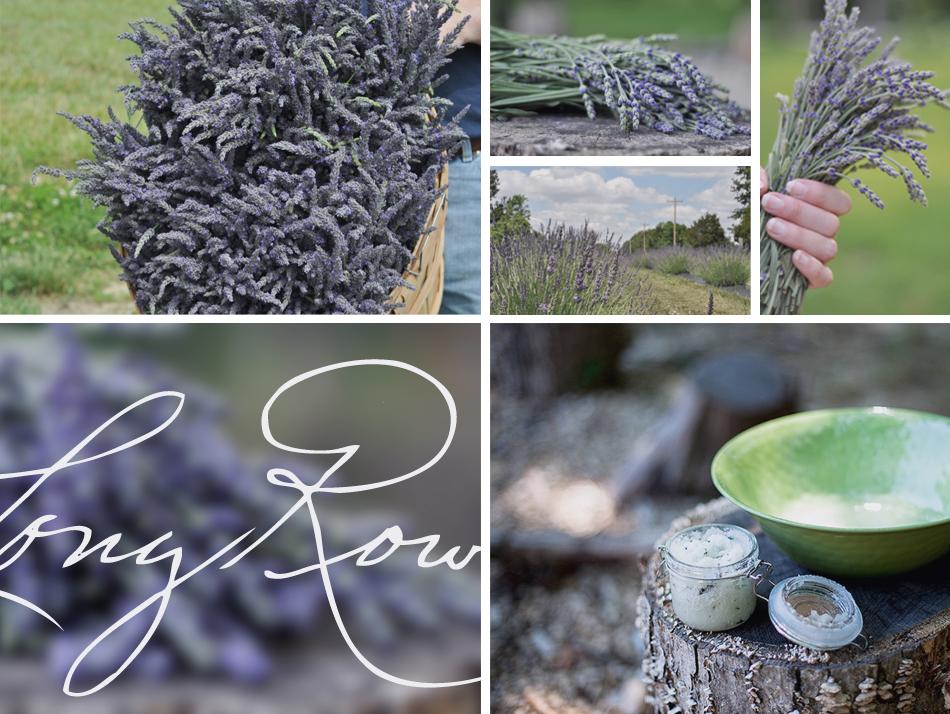 Long Row Lavender